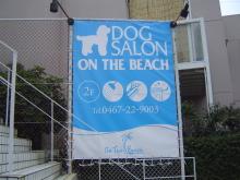 DOG SALON ON THE BEACH.jpg